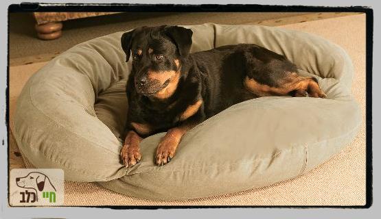 רוקי במיטה שלו