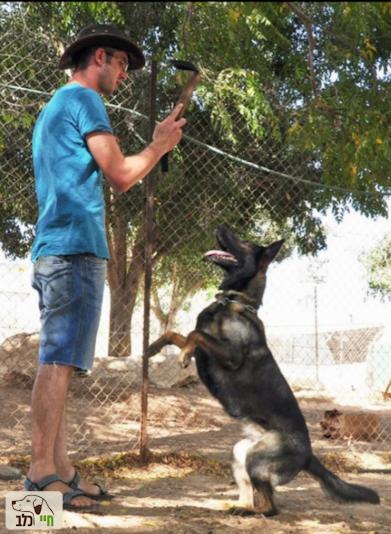 יוסף המאלף עם כלבתו מייזי