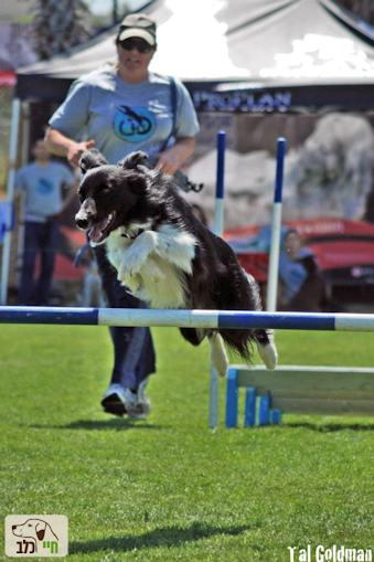 ספורט כלבני