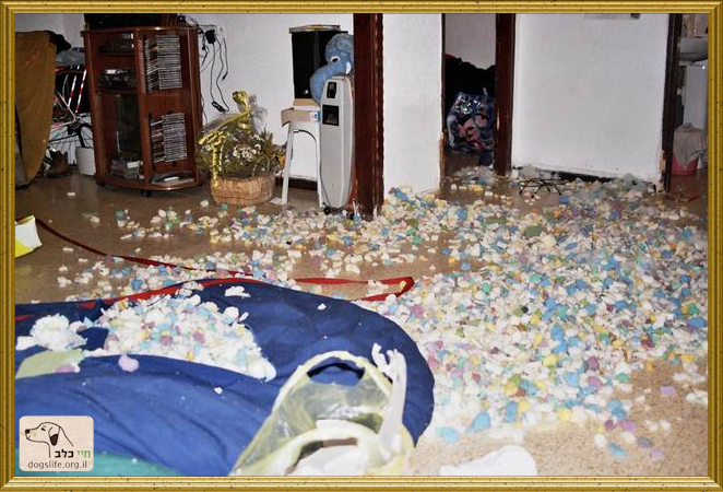 הרס בבית