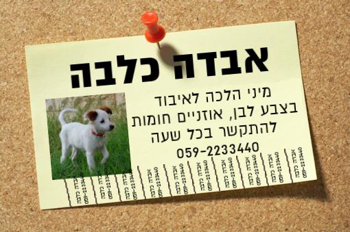 מודעה לחיפוש כלב