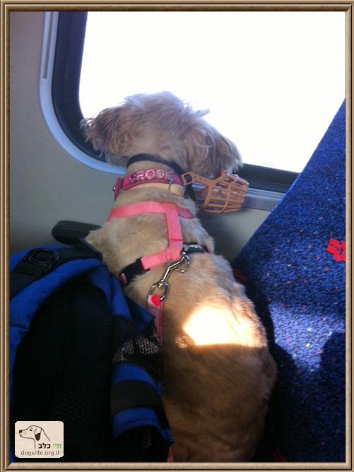 רוזי ברכבת