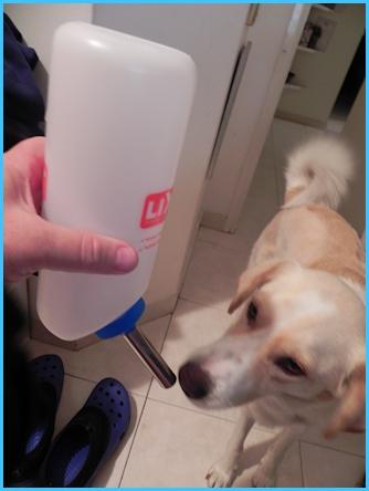 מישמיש שותה מבקבוק מים מיוחד.