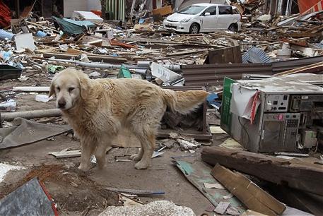 dog at risk-1