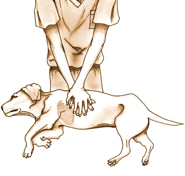 ביצוע החייאה לכלב