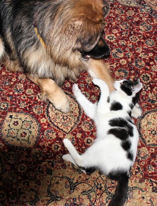 כלב וחתול יחדיו בבית